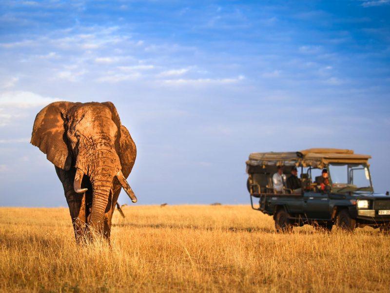 Your preferred travel companion